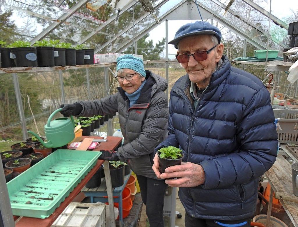 Reidun og Arne Sandvik er glad i å være ute, og i hagen har de et drivhus.