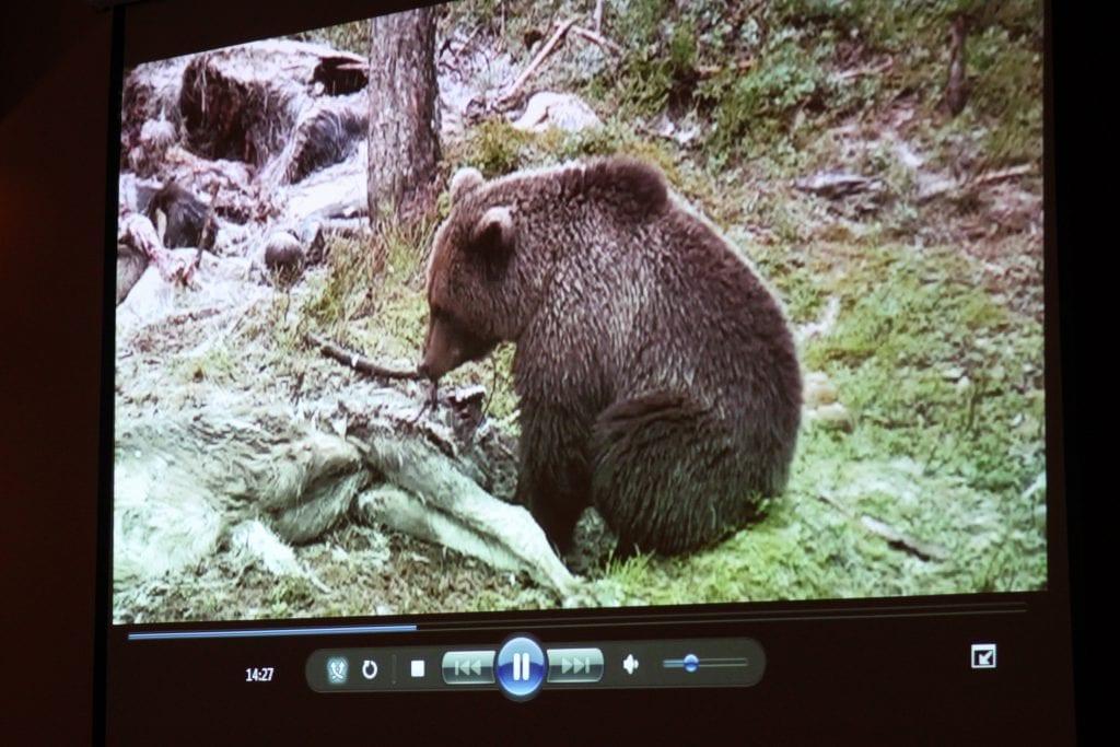 Bjørnen ble fanget på viltkamera den 5. juni. Bildet er et arkivbilde fra et tidligere år.