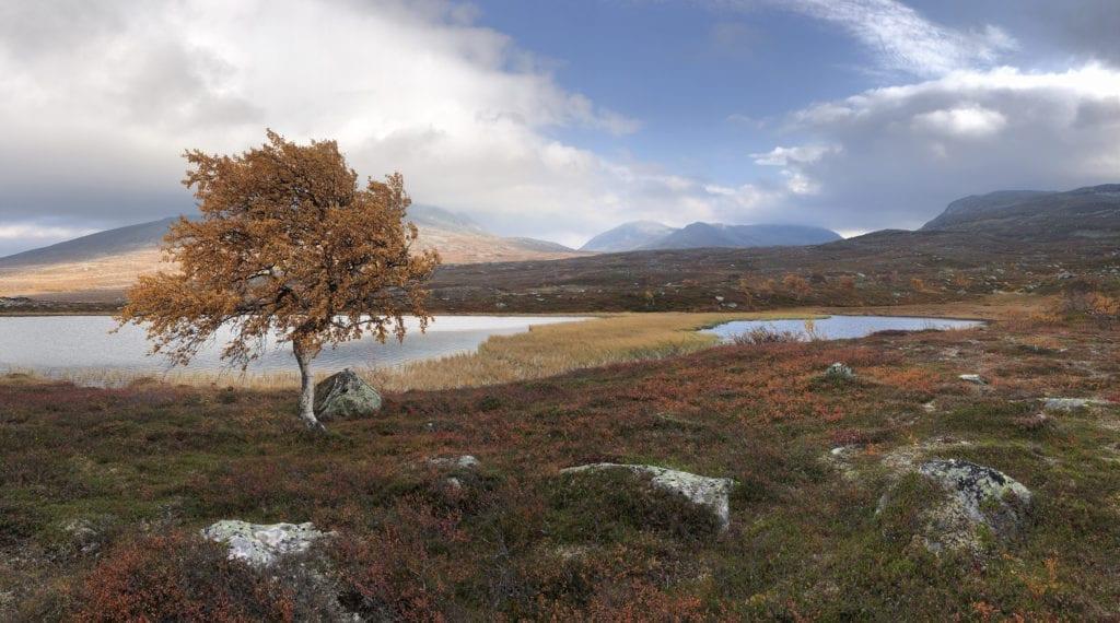Forvaltningsknutepunktet ved 705-senteret i Tydal skal fungere som et informasjonssenter og et besøkelsessted i forbindelse med nasjonalparkene og landskapsvernområdene i dalføret. Dette bildet er tatt i Skardsfjella. Foto: Merete Lien