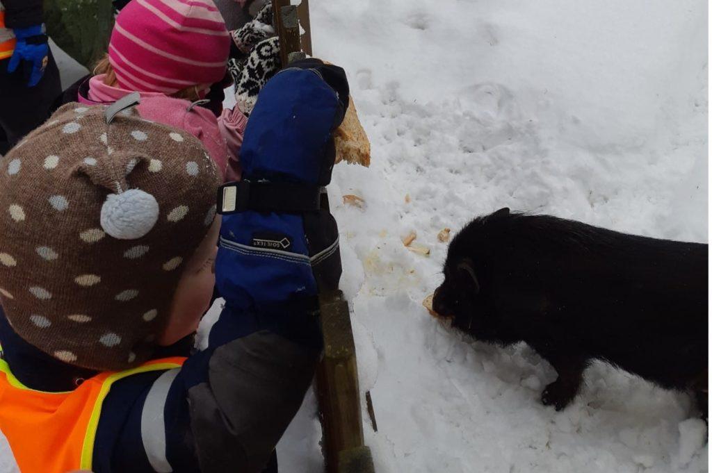 Barna på Selja besøker grisen Nasse