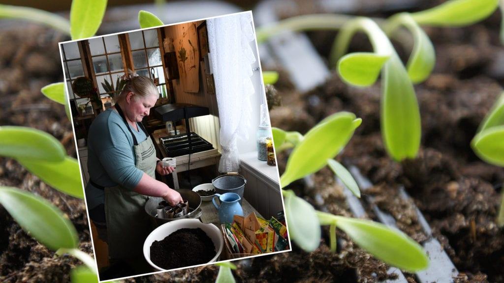 Sissel Berge har alltid hatt en forkjærlighet for planter, og mye av det hun kan er selvlært.